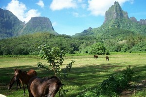 Südpazifik-Inseln - Französisch Polynesien - Moorea