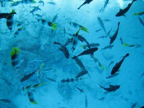 Bora Bora Urlaub - Unterwasserwelt beim Tauchen